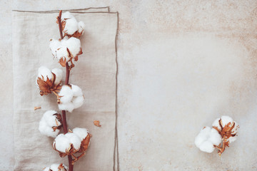 Beautiful white cotton flower branch on rustic concrete background.  Top view, blank space