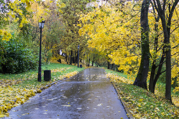 road through the park at rainy autumn morning. background, nature.