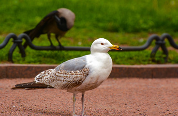 Birds in the city square.
