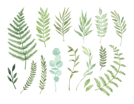 Vector watercolor illustrations. Botanical clipart. Set of Green leaves, herbs and branches. Floral Design elements. Perfect for wedding invitations, greeting cards, blogs, posters and more