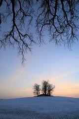 Äste im Winter, Symbol, Abschied, Trauer, Tod, Bestattung, Trauerkarte