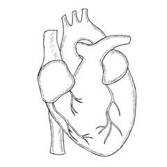 human heart sketch liner