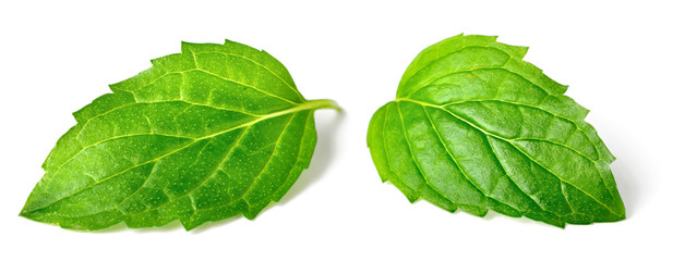 fresh peppermint leaves isolated on white