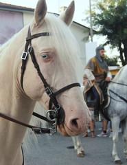 Cavalo dos olhos brancos