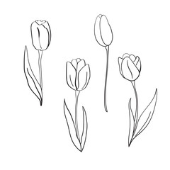 Vector tulips illustration. International women's day. For design, card, print or background