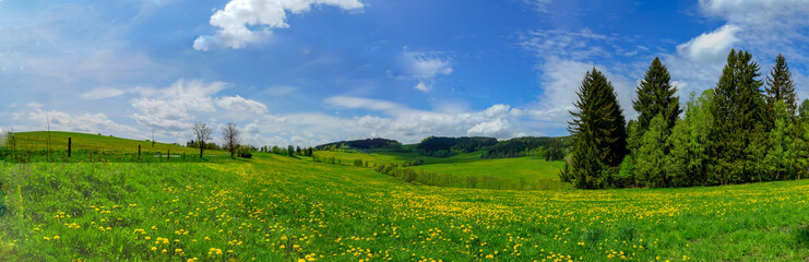 Panoramic photography of wide Dandelion field under blue sky and pine forest in countryside of Czech republic