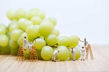 Group of miniature people washing bunch of white grape
