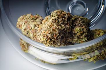 Cannabis Nug - Strain: Cheese Blower