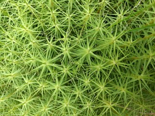 Spiky, green plant