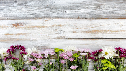 Mixed flowers forming bottom border on white weathered wooden boards