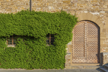 Fototapete - Ivy and retro wooden door of old Italian house in Florence, Tuscany, Italy.