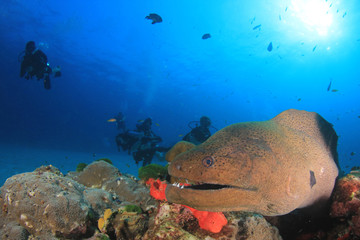 Giant Moray Eel and scuba divers