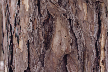 red pine bark closeup