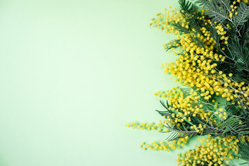 Bouquet of mimosa flowers on green background. International Women Day. Top view, flat lay