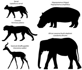 Collection of silhouettes of animals living in the territory of Africa: serval, cheetah, gerenuk, hippopotamus, african savanna elephant