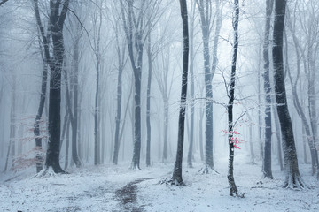 Fototapeten Wald Fairy tale foggy forest trail during winter, snow covered