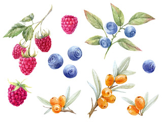 Watercolor forest berries