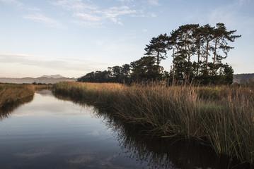 Rondevlei freshwater lake system