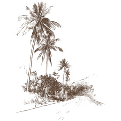 road and jungle with palm trees on the edges, sketch vector graphic monochrome drawing