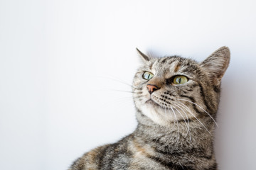 gray cat with green eyes on a white background