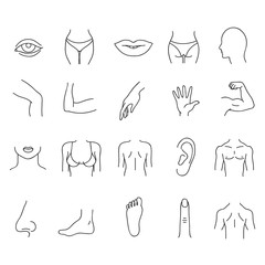 Line human male and female body parts vector set
