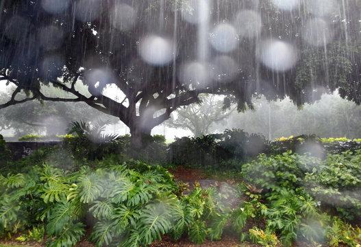 ハワイに降る雨 Rain falling in Hawaii