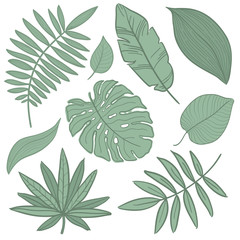 Vector tropical palm leaves, jungle, split leaf, philodendron, set isolated on white background.