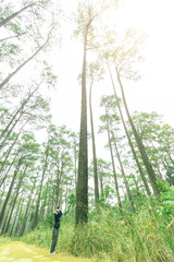 Photogragher taking picture of very tall pine tree ( pinus merkusii ) in National forest park , north of Thailand