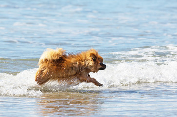 spitz in the sea