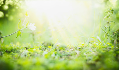 Sunny summer background with green grass , sun shine and bokeh Wall mural