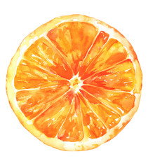 Watercolour orange drawing, isolated on white