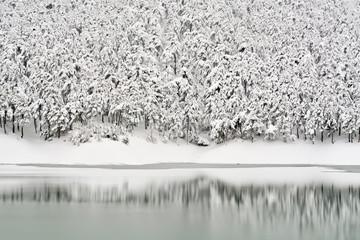 Ormanın Üzerinde Kar Örtüsü
