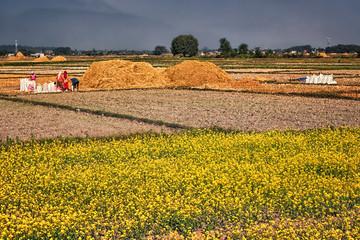 Rural Scene, Terai, Nepal