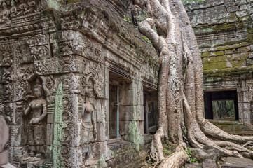 Roots of a banyan tree at Bayon temple in Angkor, Siem Rep, Cambodia