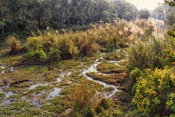 Swampy Region in Chitwan NP, Nepal