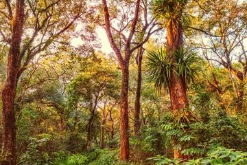 Forest in Chitwan NP, Nepal