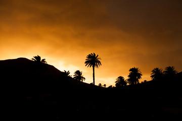 Haría, Lanzarote / Spain, January 26, 2018: Sunset view, skyline with silhouettes of palm trees