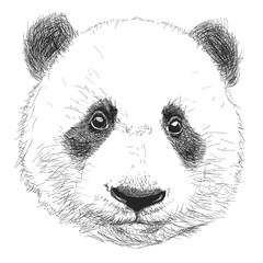 Hand drawn portrait of Panda. Black and white vector doodles isolated on white background.