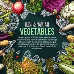 Vector sketch poster of natural farm vegetables