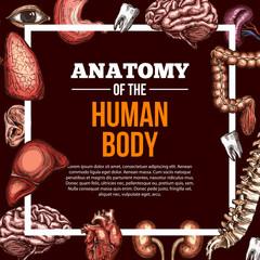 Human organs vector sketch anatomy poster