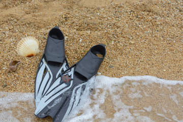 shell and flippers on the sand. Background