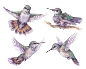 Watercolor Hummingbird Set