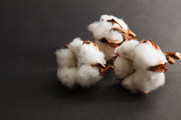 Dry blossom cotton