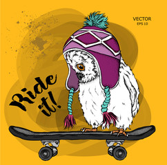 Portrait of an owl in a hat on a skateboard.Can be used for printing on T-shirts, flyers, etc. Vector illustration