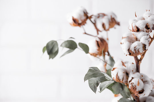 Autumn composition. Dried white fluffy cotton flowers on white wood wall with copy space. Floral composition