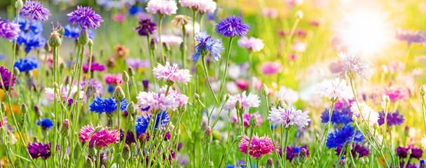 Blütenmeer, Frühlingserwachen, schöner Tag, Alles Liebe zu Geburtstag, Muttertag, Jahrestag, Antrag, Valentinstag, Ostern: Bunte Kornblumen :)