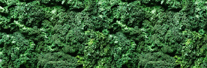 Fresh organic green kale background, selective focus, top view, copy space. Green texture. Banner Wall mural