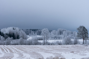 Freezing winter landscape with trees covered with frost