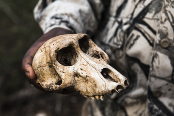 Close up of man holding baboon skull, KwaZulu Natal, South Africa