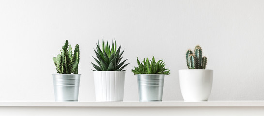 Photo sur Plexiglas Cactus Collection of various cactus and succulent plants in different pots. Potted cactus house plants on white shelf against white wall.